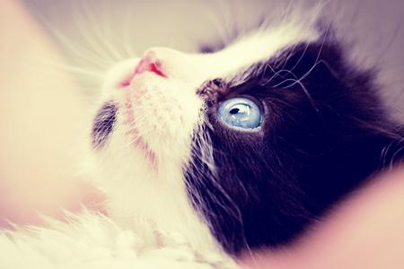Tuna's Blue Eye